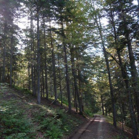Enduro n°118 – La forêt de l'Ayré