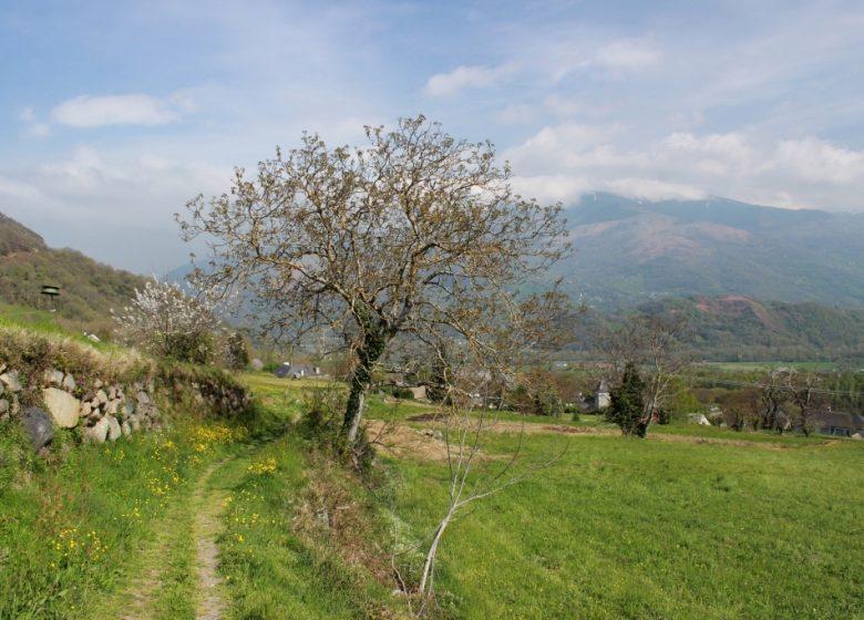 Circuit n°4 – Vallée d'Argelès – L'Extrem de Salles