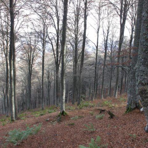 Circuit n°8 – Val d'Azun – La forêt d'Arragnat